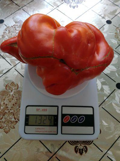 Пеньков Алексей, с. Грушевское, Александровский район. «Вот такие помидоры и фасоль выросли у нас в этом году»