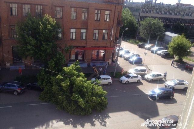 Падающие деревья - обычная ситуация для жителей Новосибирска.