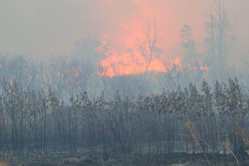Природному пожару в Усть-Донецком районе присвоен самый высокий, пятый уровень сложности.
