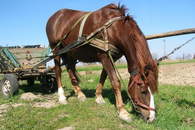 Девушка передвигалась по городу на коне.