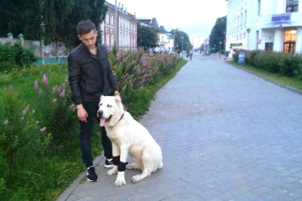 Чумбаровка - любимая улица жителей Архангельска и их питомцев