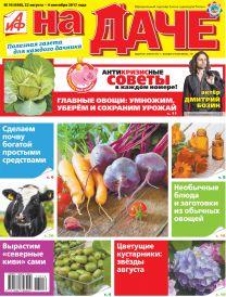Главные овощи: умножим, уберём и сохраним урожай