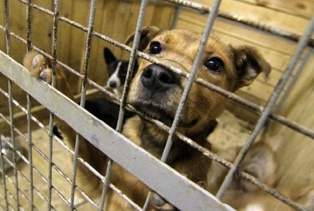 Жительницу Ноябрьска возмутил живодёрский отлов бродячих собак