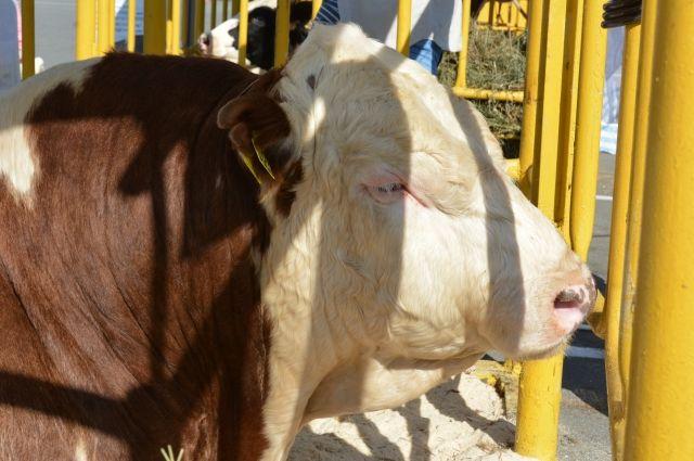 Для стимулирования животноводства в регионе будут развивать производство соответствующего оборудования.