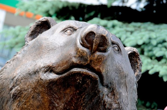 Медведь - символ Пермского края.