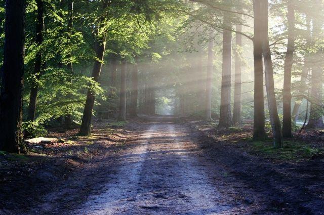 Пенсионерка из Тобольска пошла в лес и заблудилась