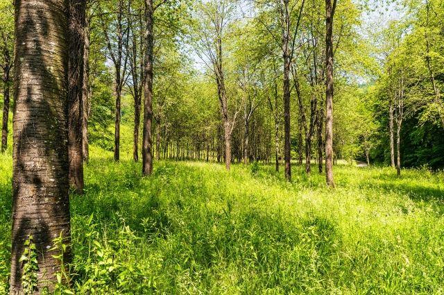 В лесу заблудился иркутянин.