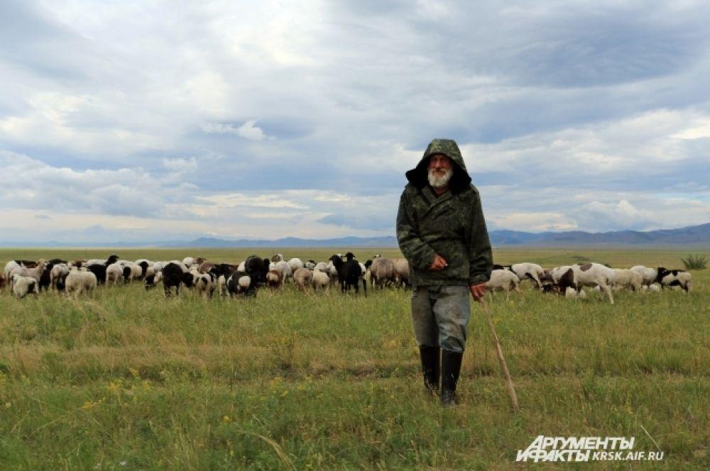 Чабан с отарой овец - хозяин степи.