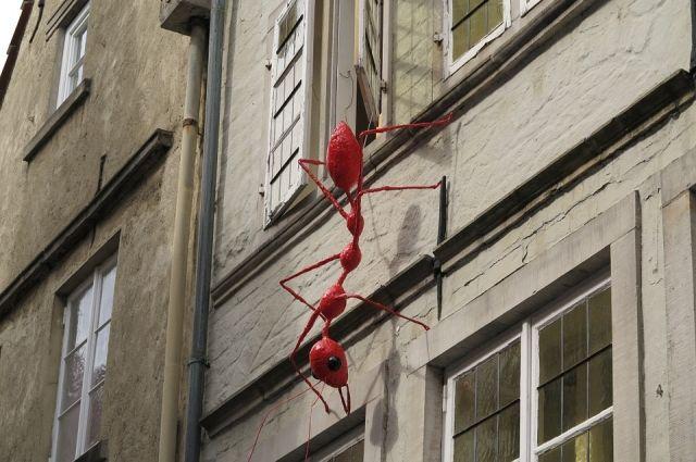 Роспотребнадзор отмечает рост жалоб на насекомых-вредителей в квартирах и объектах общепита в Челябинске.