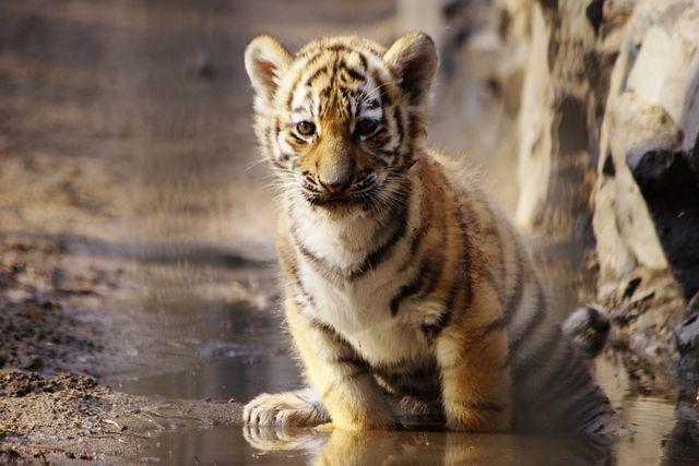 Медведь отсалютует лапой и подмигнет, а тигр улыбнется.