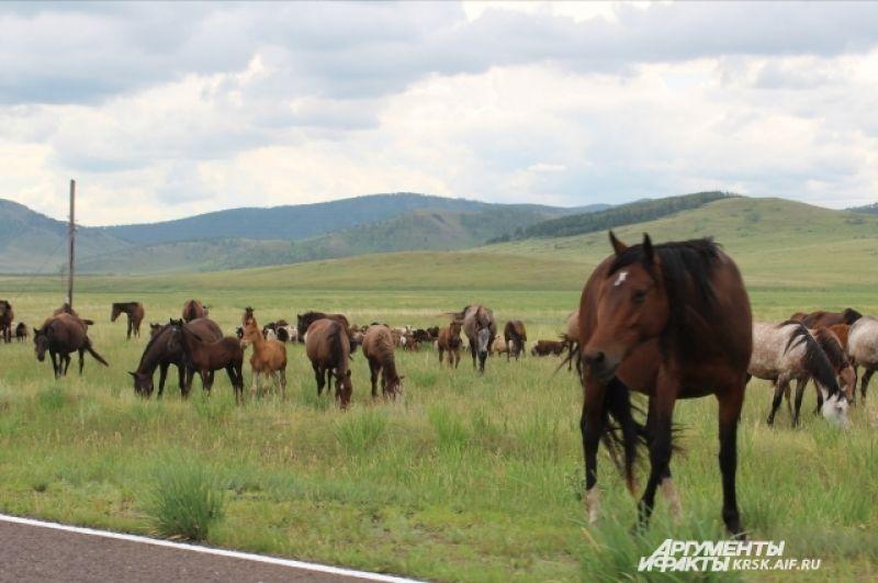 В степи пасутся лошади.