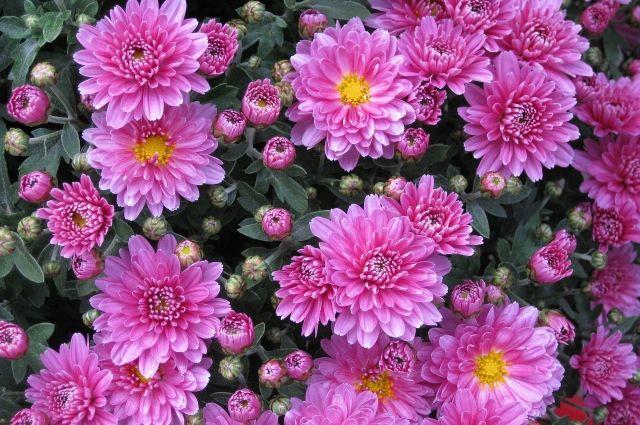 Созданную цветочную композицию можно будет забрать с собой.
