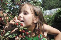 Свежие ягоды для приготовления джемов прикамские предприниматели покупают по всей стране.