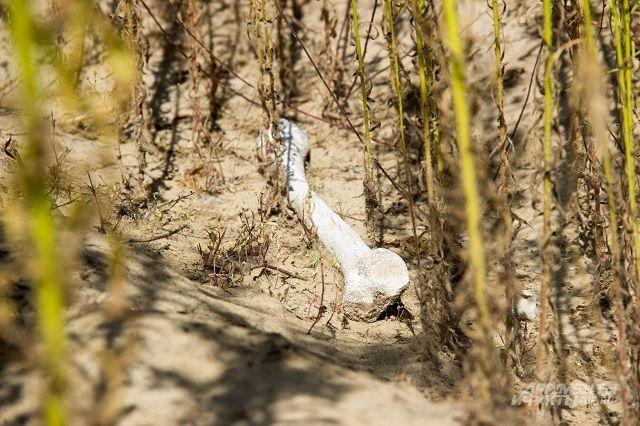 Брошенные останки вот уже много лет покоятся в песчаном карьере неподалеку от деревни Сентяпино.