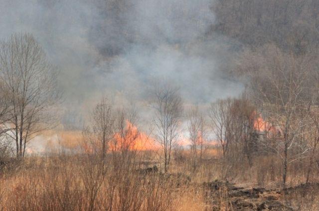 Из-за жары риск возникновения лесных пожаров увеличивается.
