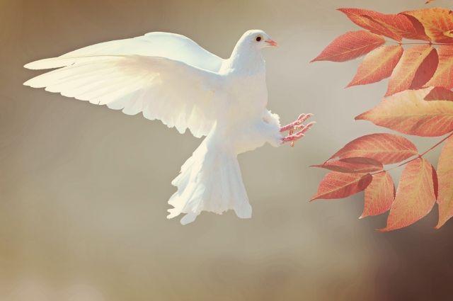 Птицу мира можно будет нарисовать или сделать из бумаги.