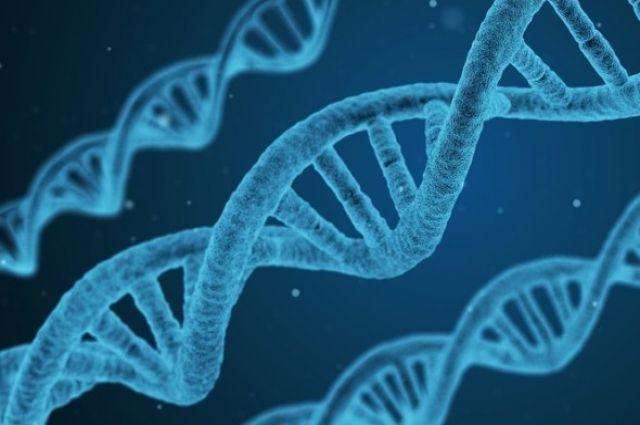 Анорексию провоцируют наследные факторы, удивительная диета инагрузки— Ученые