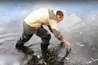 Наши коллеги с Репортёр73 снимали телесюжет, как местное население собирает умирающую рыбу на корм скоту...