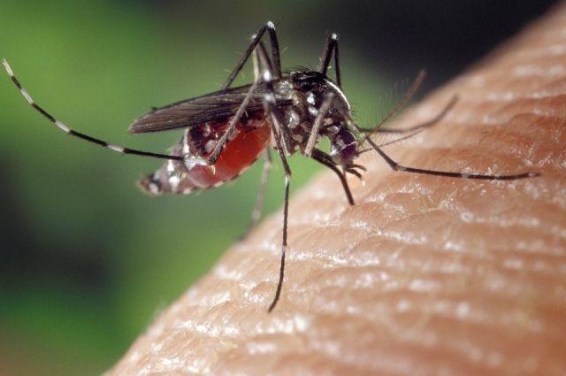Возбудители болезней передаются комарами.