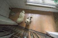 Липчане неравнодушны к судьбам бездомных животных.