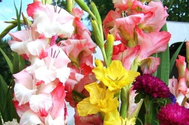 На выставке можно увидеть гладиолусы, флоксы, метельчатые гортензии и другие цветы.