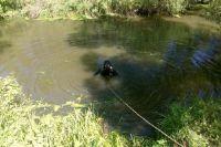 Спасатели провели водолазный поиск.