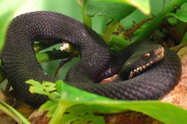 В Тюмени пенсионер поймал гадюку за хвост, но змея укусила мужчину