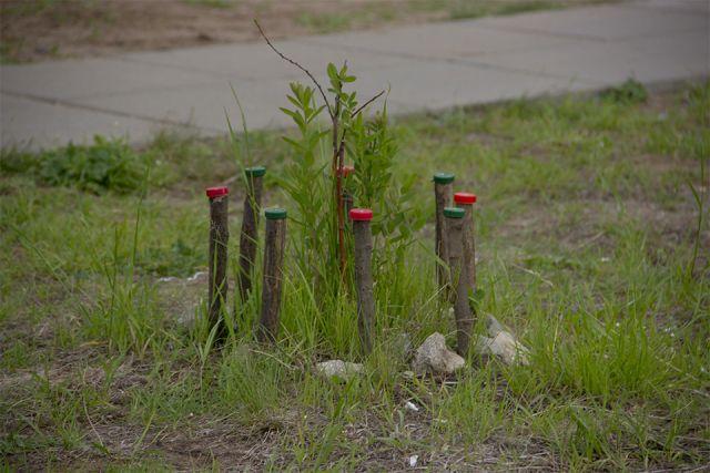 Более 70 человек высадят деревья в Иркутске.