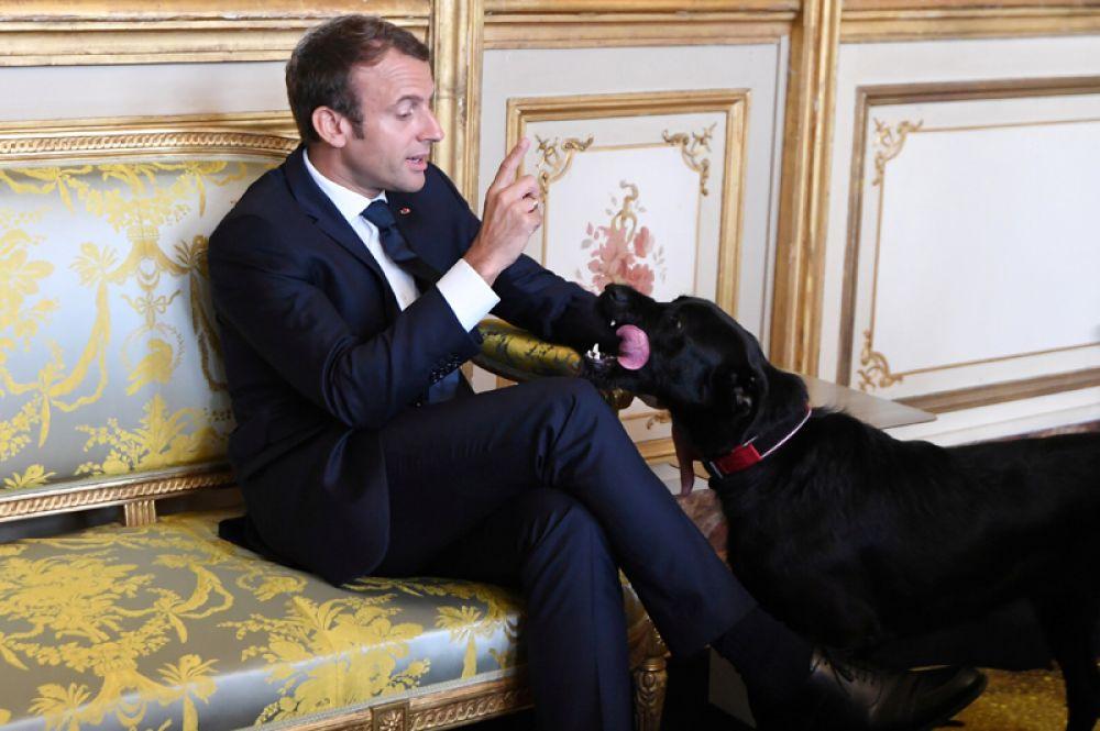 30 августа. Французский президент Эммануэль Макрон и его собака Немо во время встречи с вице-канцлером Германии и министром иностранных дел Германии в Елисейском дворце в Париже.