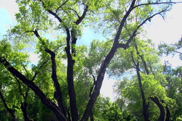 В следующие выходные ямальцы будут сажать деревья