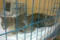 Выжившие кошки находятся в клиниках.