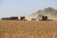Зерно проходит все стадии обработки.