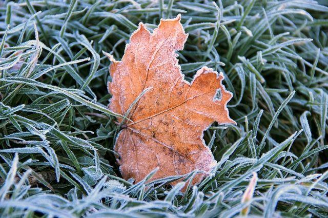 7 сентября ожидается похолодание до -2 градусов мороза.