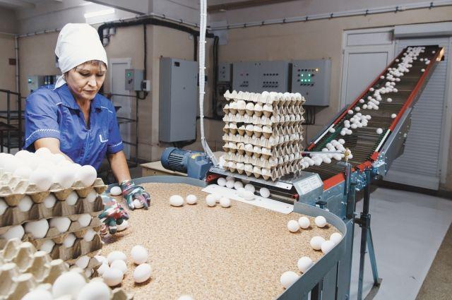 В краевом бюджете заложено 65 млн руб. на поддержку сельхозпроизводителей, которые регулярно инвестируют доходы в производство.