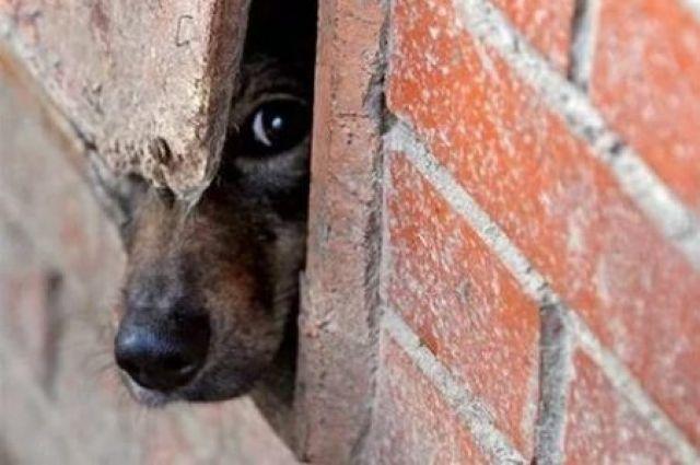 В Тюмени пройдут митинги в защиту животных