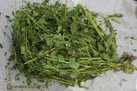 Семью из Омска обвиняют в выращивании и производстве наркотиков.