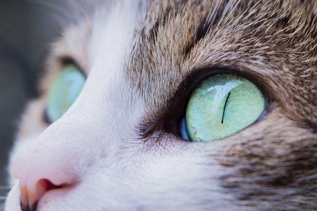Кошечки и собачки из тюменского приюта нуждаются в овощах, мясе и крупе