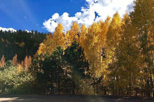 В муниципальных районах работу ведут 23 лесхоза.