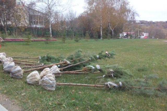 В Пуровском районе высадят пятьсот саженцев
