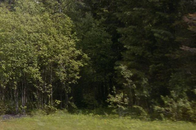 Одной из потерявшихся в лесу стало плохо.