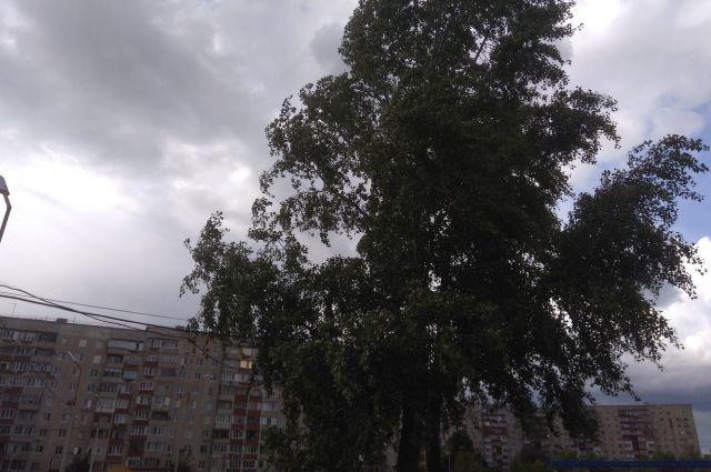 МЧС: в Оренбуржье сильный ветер не стихнет до конца выходных.