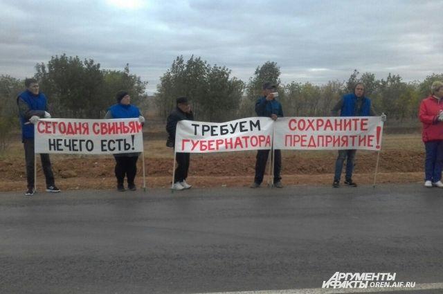 Протест надороге. сотрудники свинокомплекса заблокировали трассу Оренбург-Соль-Илецк