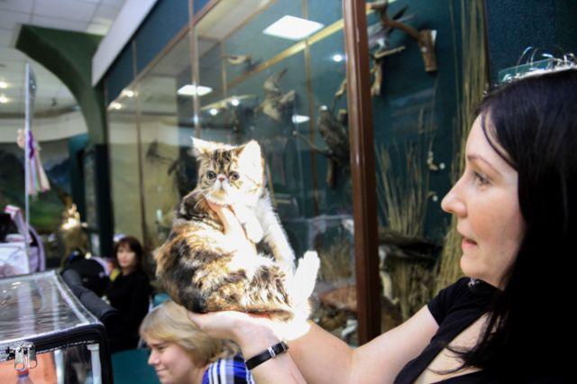 Ярмарка-выставка котят пройдет в Иркутске.