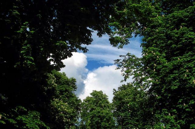 ВПетербурге назвали самый комфортабельный парк вгороде