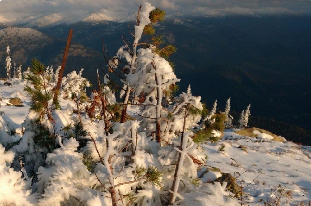 Снег застал природу Кузнецкого Алатау ещё зелёной.
