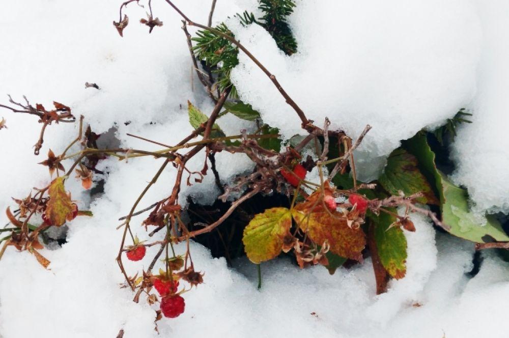 Природа к зиме никогда не готова, если речь идёт о южных горах.