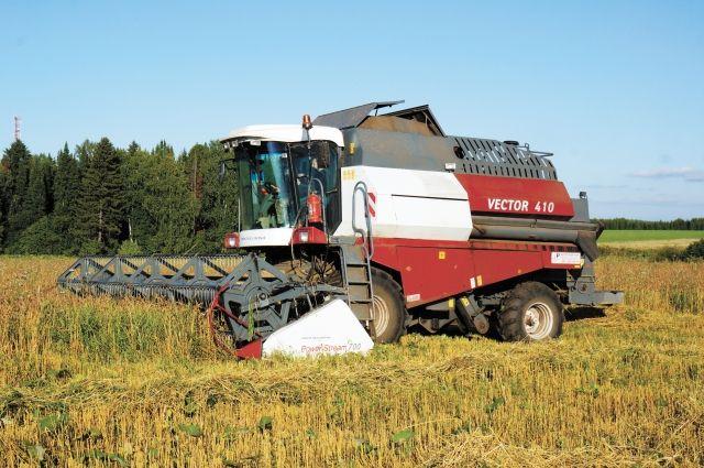 Заготовка кормов в Сабарке: идёт уборка пшеницы.