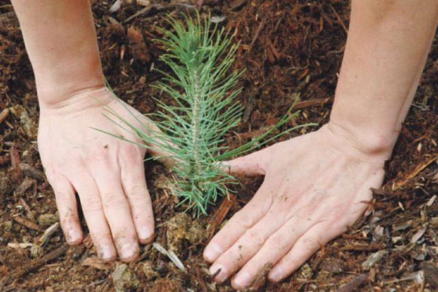 Лесоводы области в Год экологии высадили свыше 7,5 млн штук сеянцев и саженцев различных древесно-кустарниковых пород.