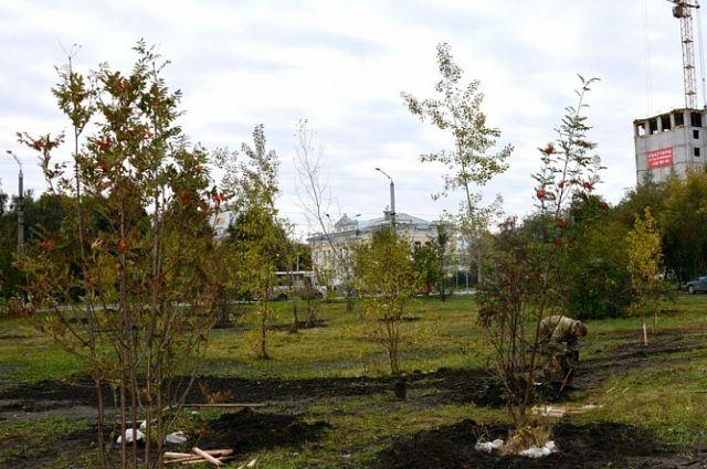 В районе Привокзальной площади высаживают рябины