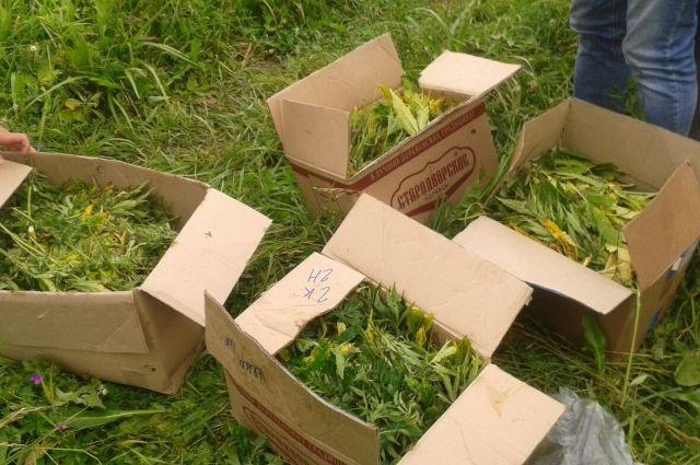 Крымского депутата подозревают ввыращивании конопли
